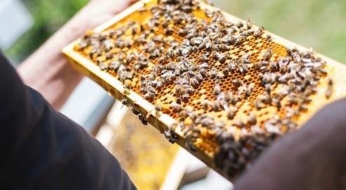 Wie-entsteht-Honig?