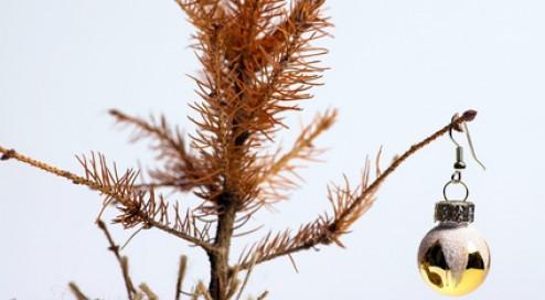 Schon-den-Weihnachtsbaum-besorgt?