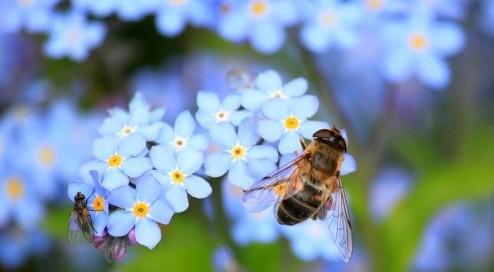 Keine-Bienen,-kein-Honig!